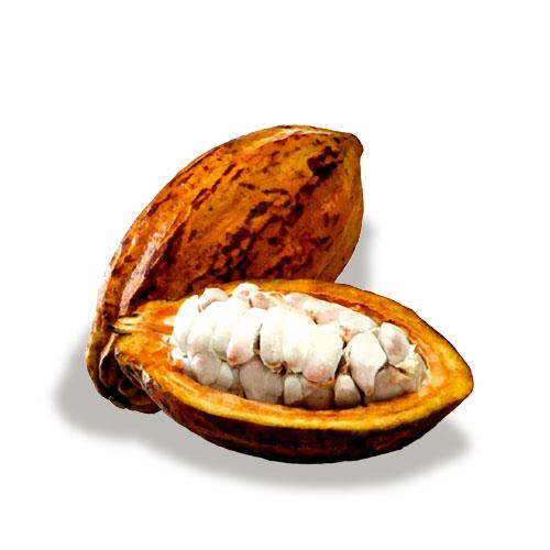 exotic fruit cocoa mc garlet