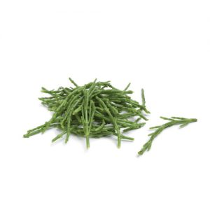 Salicornia Mc Garlet