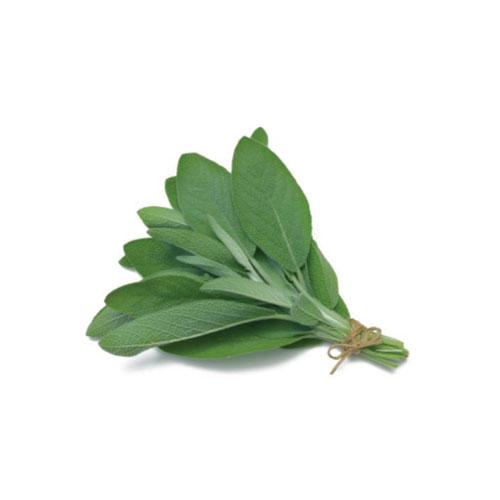 Salvia Mc Garlet