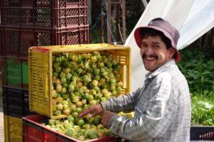 Produttori in Colombia